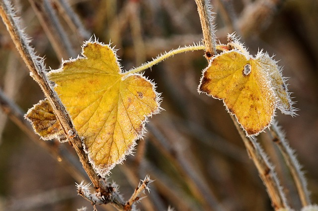 autumn-542459_640